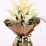 马蹄莲 祝福 爱情 友情用花