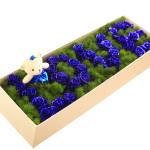 一眼入梦-33朵蓝玫瑰
