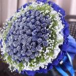 爱.相伴-66朵蓝玫瑰花束