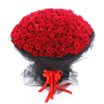 每天的爱恋-365朵红玫瑰
